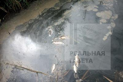Река Лугань почернела (видео)
