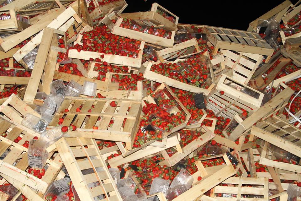 В России уничтожили 38 тонн клубники из Украины (фото)
