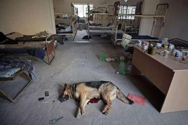 Убитая боевиками служебная собака пограничников