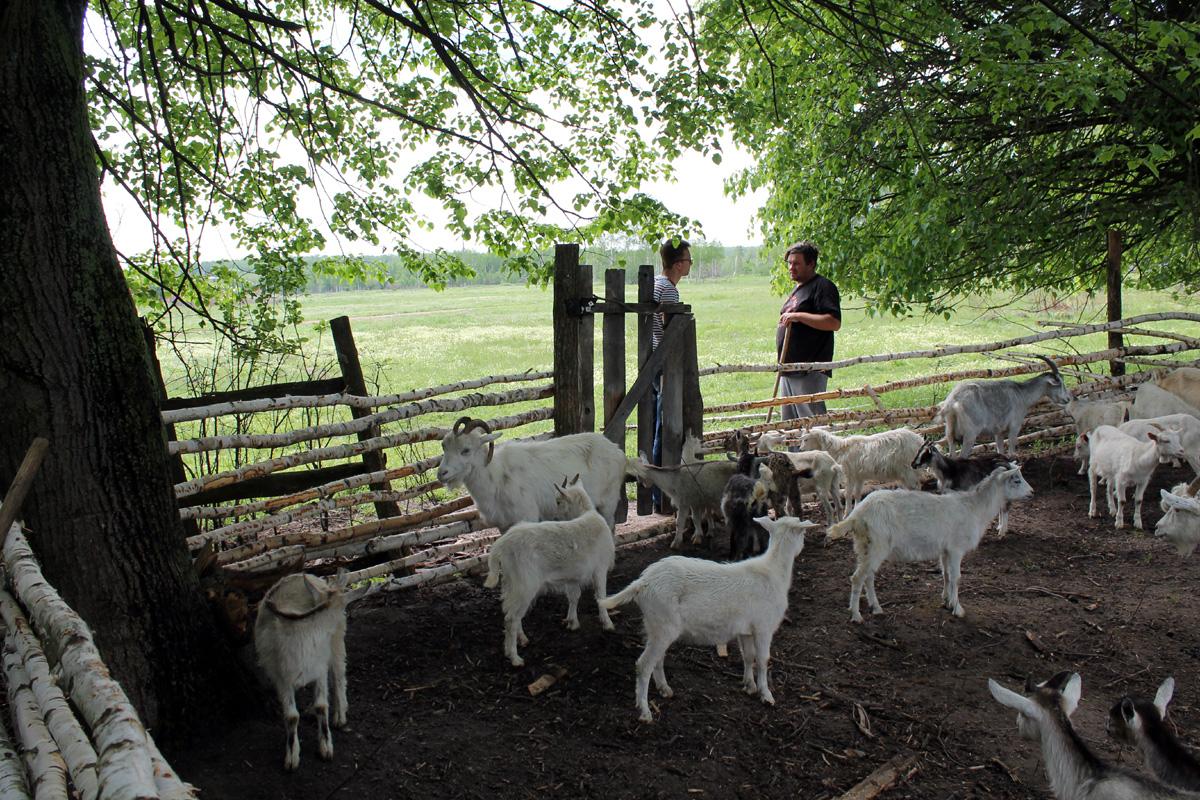 За первые 5 месяцев на новом месте стадо выросло с 15 до сотни голов