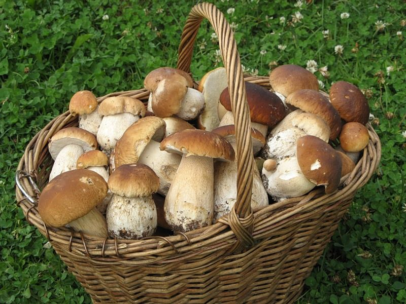 В Луганской области от отравления грибами умер ребенок