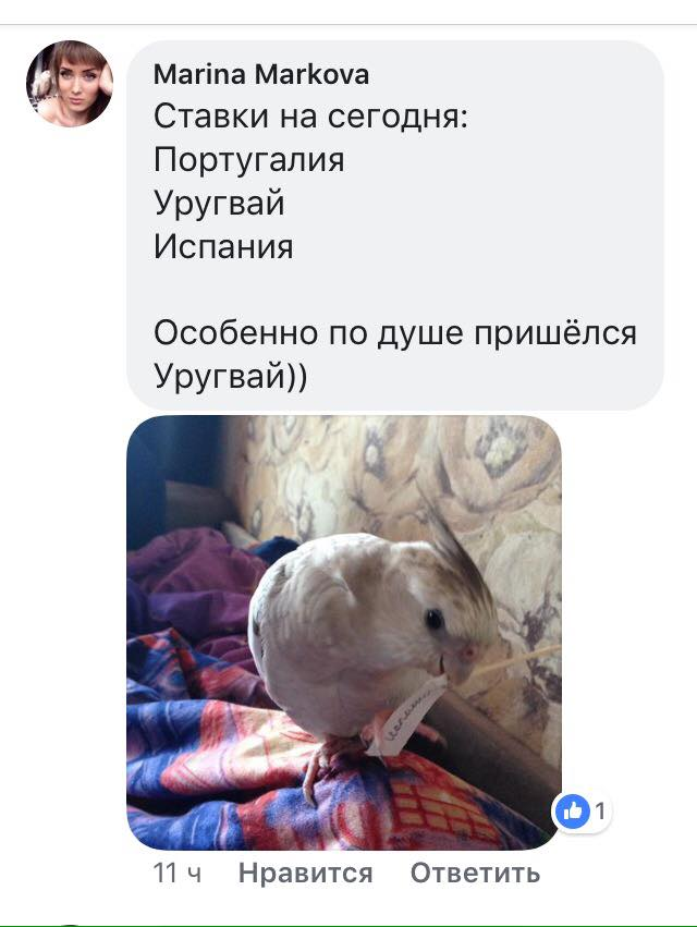 В Луганске утверждают, что попугай верно предсказывает результаты матчей ЧМ-2018