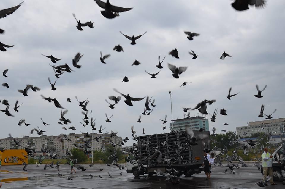В Северодонецке в небо выпустили 10 тысяч голубей