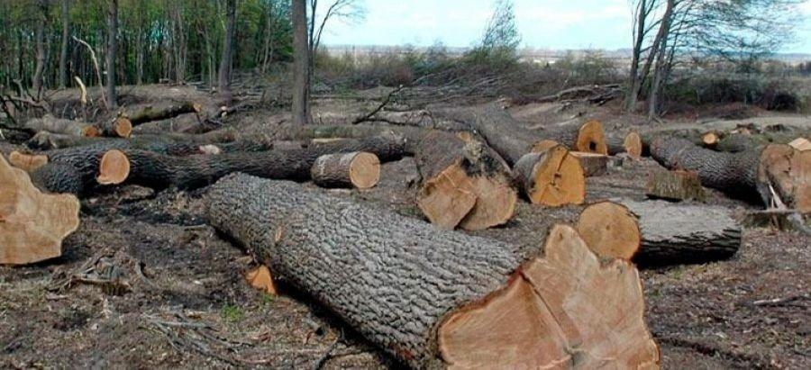 На Луганщине работники ГСЧС незаконно рубили дубы и ясени