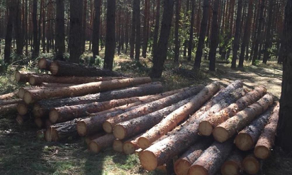 В Новоайдарском районе выявили группу «черных лесорубов» из 20 человек