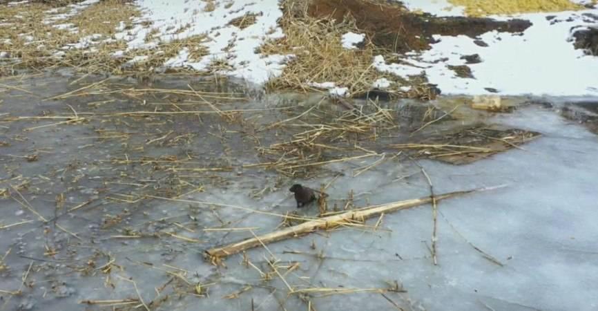 На Донбассе заметили исчезающую краснокнижную норку