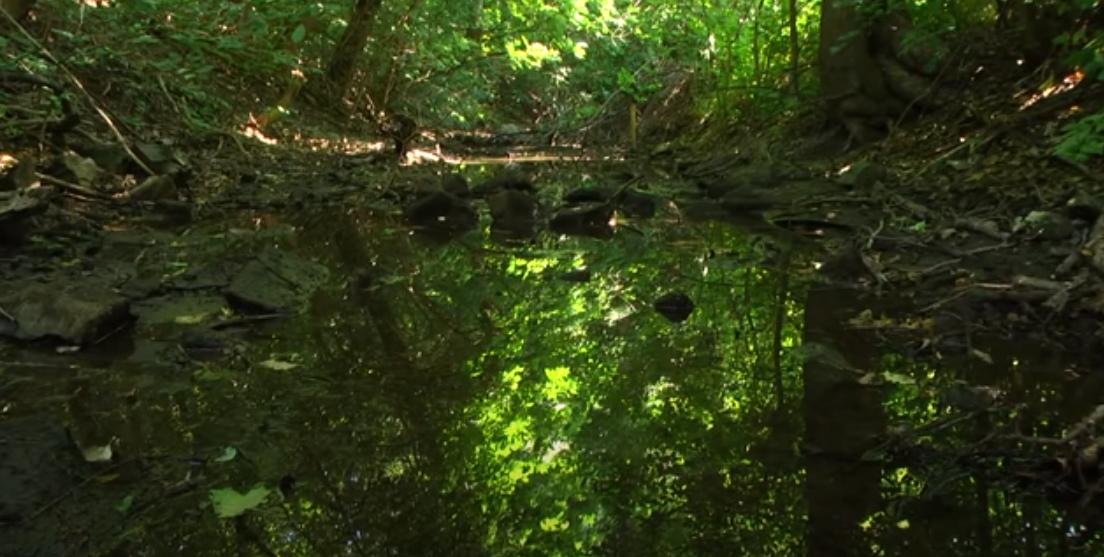 В ОРЛО исчезают водоемы. Причина – закрытие шахт
