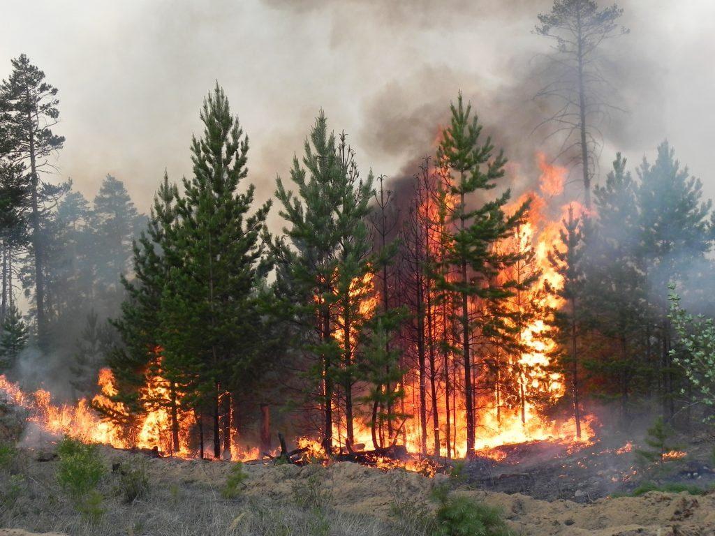 В Луганской области снова горит лес. Люди говорят, что им нечем тушить огонь