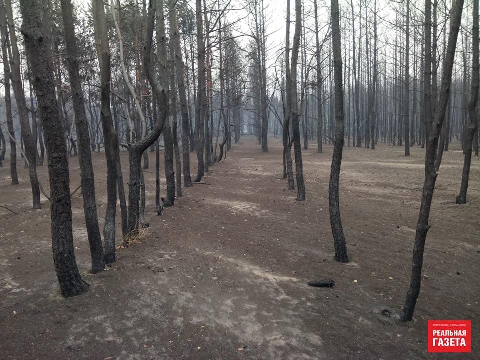 Остались только голые стволы. Как выглядит сгоревший лес в районе Северодонецкого аэропорта (ФОТО)