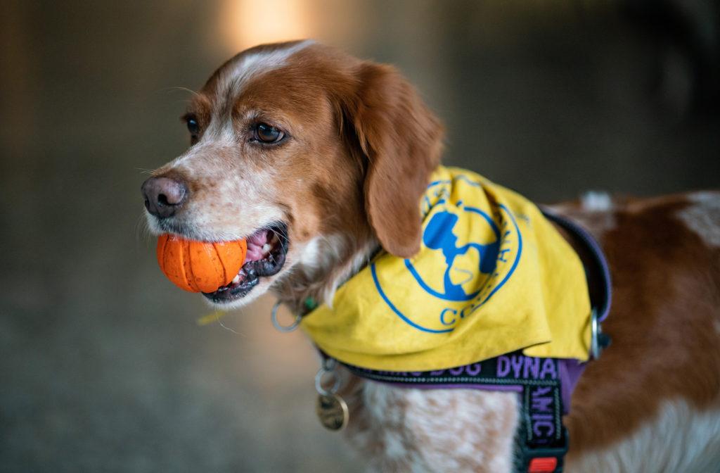 Коли собака ― психологічний поводир