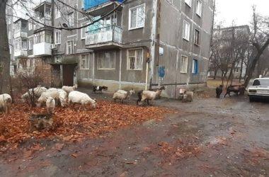 В Луганске запретили выпасать скот и выгуливать домашних животных в парках