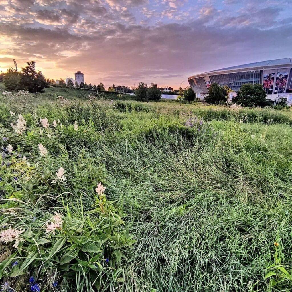 «Донбасс Арена» в зарослях амброзии. Опубликованы новые фотографии
