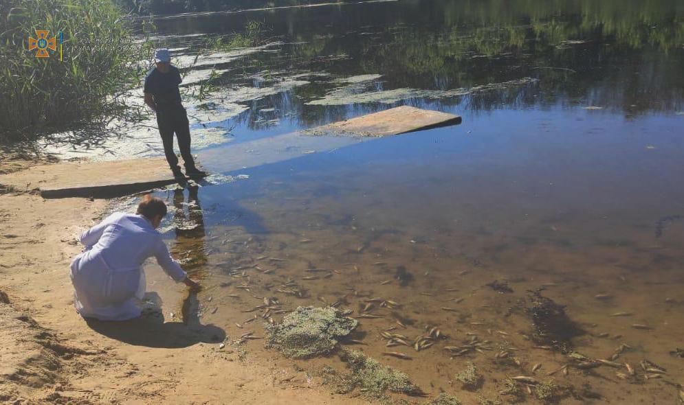 В реке Айдар массово гибнет рыба. Отдыхающих призывают не лезть в воду