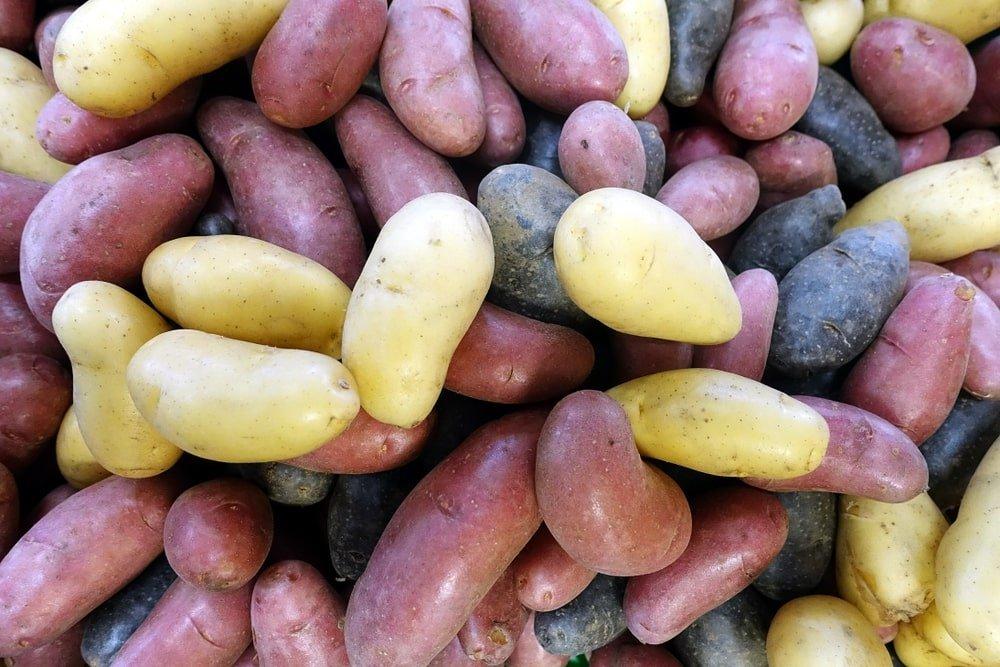 Журналисты из Донецка поехали на российскую границу искать фуры с картофелем. Что они обнаружили